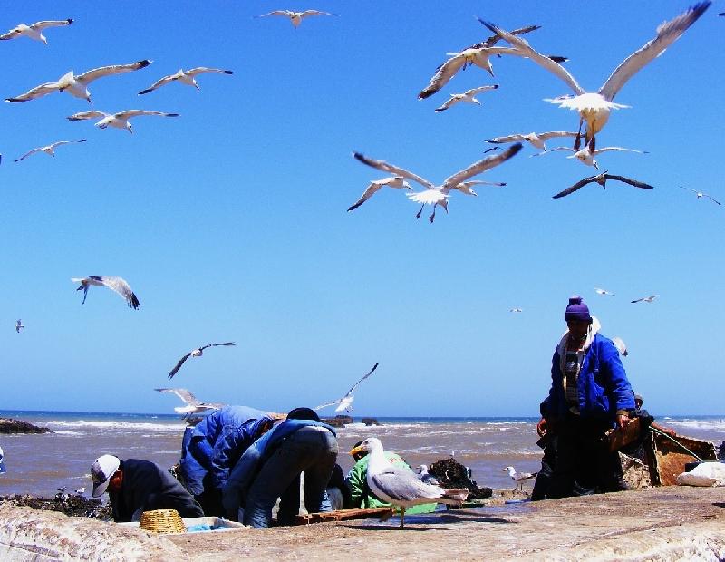 Marocco si mobilita, no rifiuti italiani